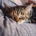 良質な睡眠に効果的な栄養素